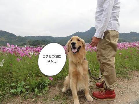 run20111029-1.JPG
