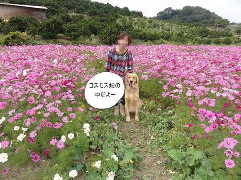 run20111029-5.JPG