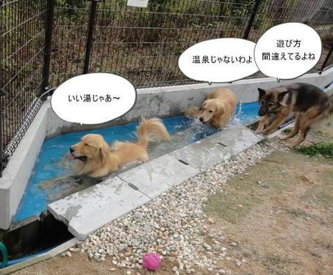 run20111102-4.JPG