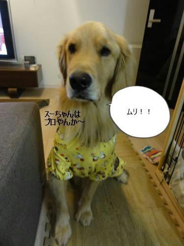 run20111104-8.JPG