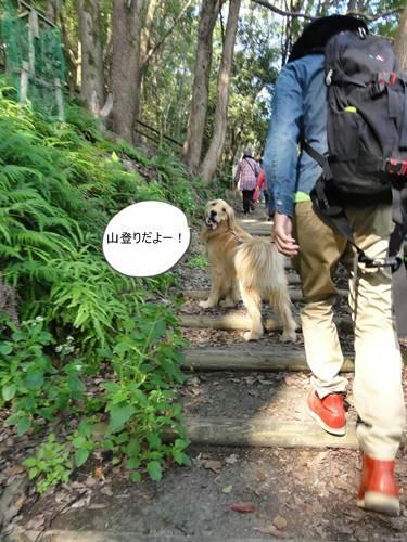 run20111117-3.JPG