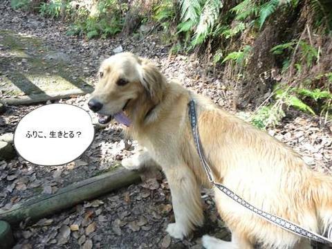 run20111117-7.JPG