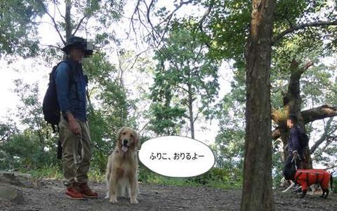 run20111117-11.JPG