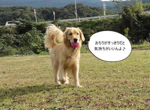 run20111120-1.JPG