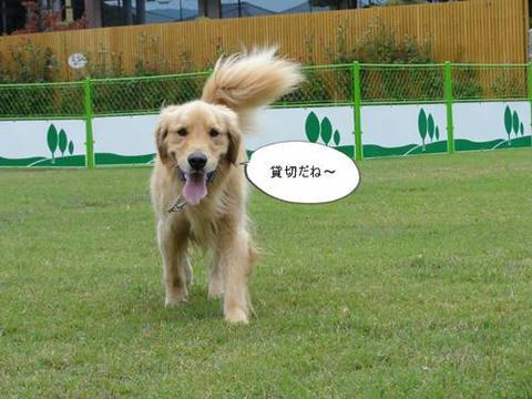 run20111123-2.JPG