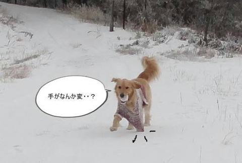 run20120103-8.JPG