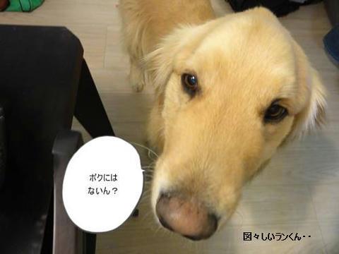 run20120224-4.JPG