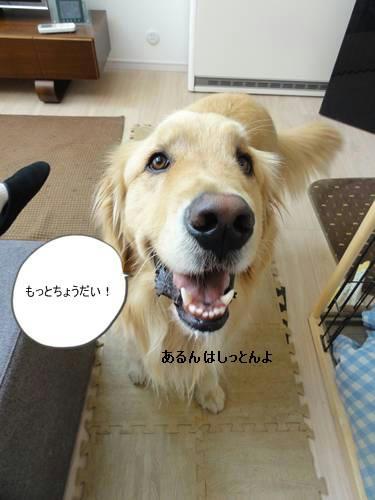 run20120317-9.JPG