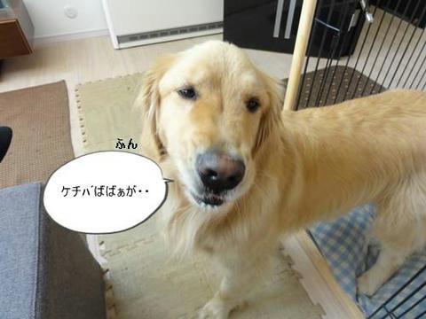 run20120317-10.JPG