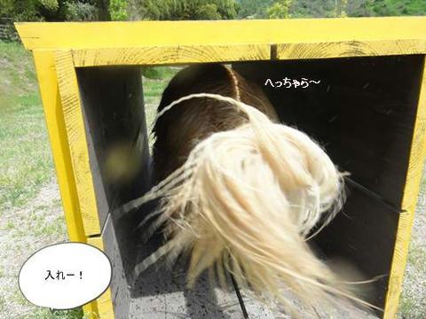 run20120425-5.JPG