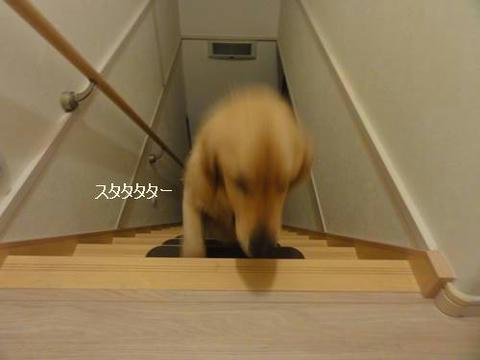 run20120628-8.JPG
