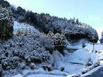 初雪(^O^)/