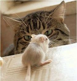 猫が教える猫語辞典