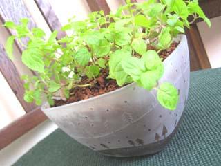 Tetto Art School・サンドブラスト植木鉢