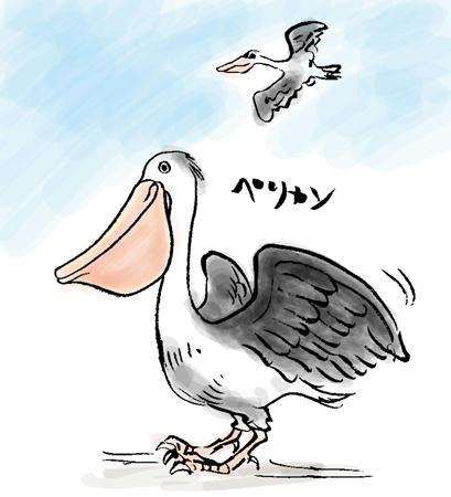 意外とでかい鳥