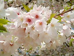 2008_0412_094826AA.jpg