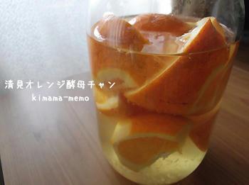 清見オレンジ酵母チャン。