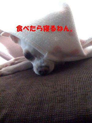 __1sai2.jpg
