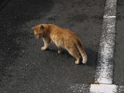 野良猫@八代駅前