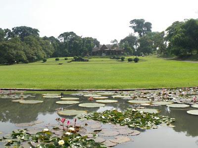園内のカフェと蓮池