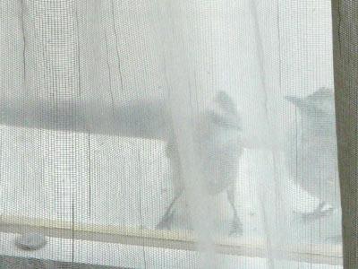 小鳥のお客さん