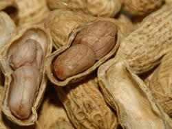茹でた地豆
