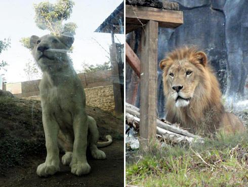 Jatim Park2 Batu Secret Zoo