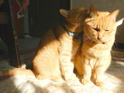 トラ猫が2匹