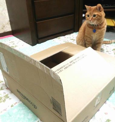 サンジは箱が好きじゃない