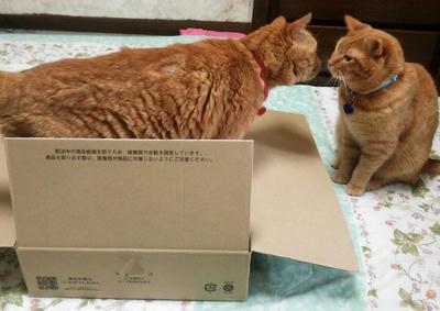 箱もらってもいい?