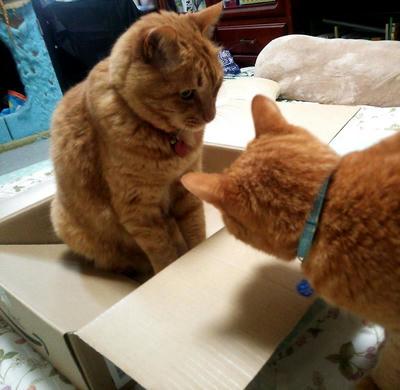 箱ちょうだい