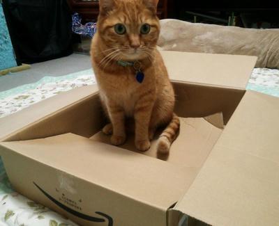 箱にサンジ