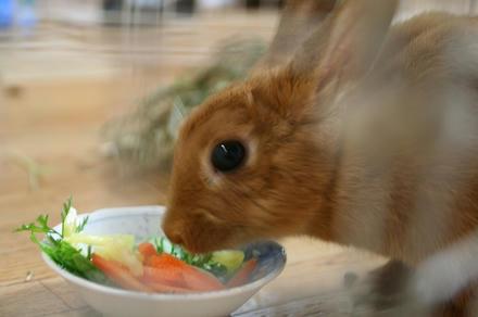 食べてます
