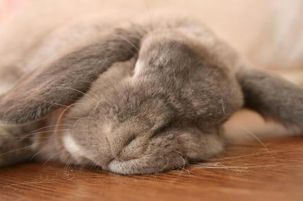 おっさん寝顔