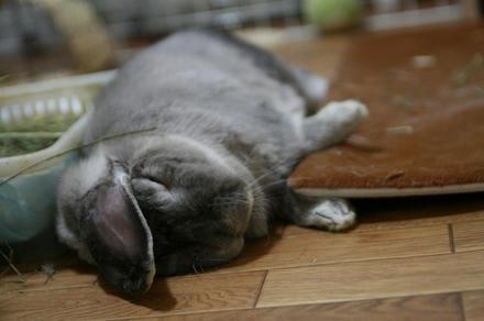 よく寝てるでちゅ