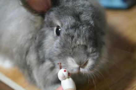 鳴きウサギちゃんでちょうか