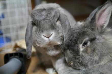 ウサギやったら