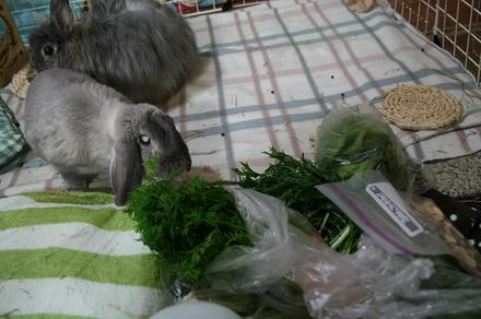 お野菜を!