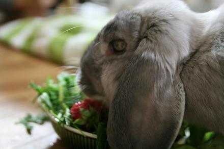 イチゴありがとうやで!