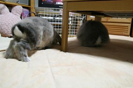 テーブルの下に