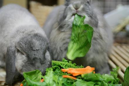 野菜たべて