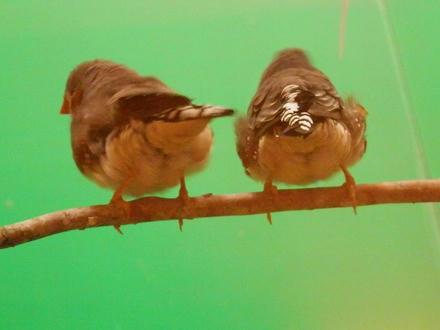 鳥見カフェに