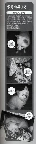 愛犬チャンプ4月号「りーぱら」