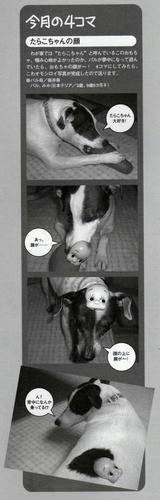 愛犬チャンプ6月号「りーぱら」