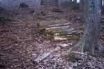 峰山高原の森の中の束ね木
