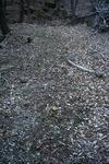 峰山高原の落ち葉の道