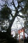 出石城大木の全景