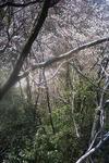 鴨ヶ磯の途中の山林