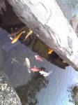 水車小屋の池