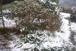 午前11時の積雪